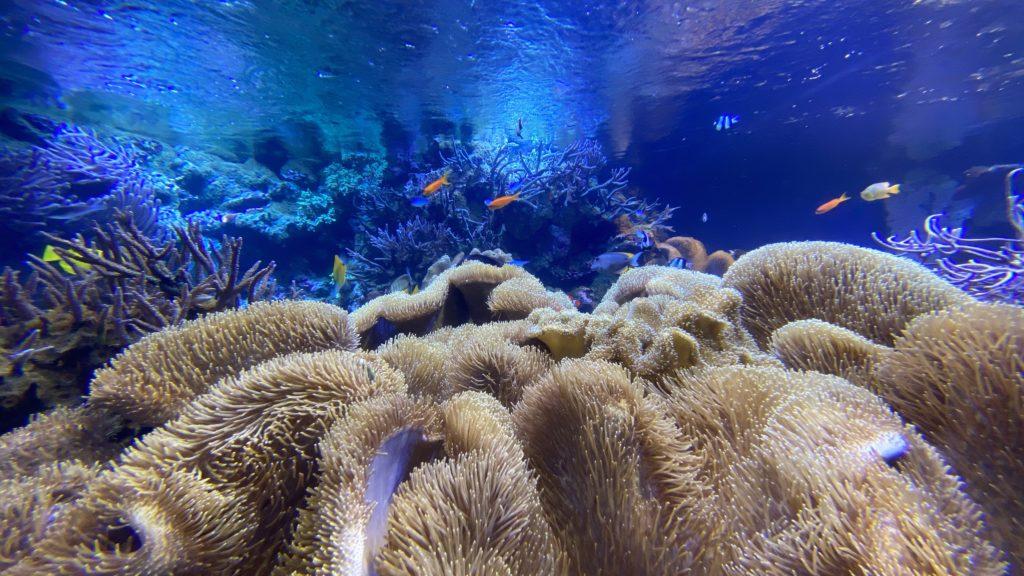 鳥羽水族館 熱帯魚