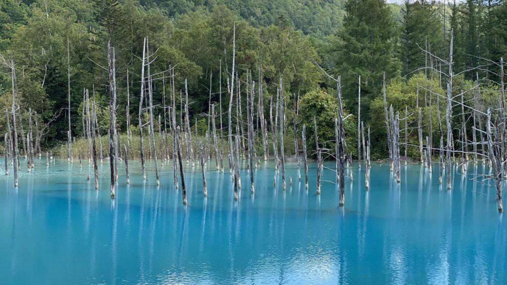 6日目 旭川から美瑛へ!美しい景色を楽しむ1日