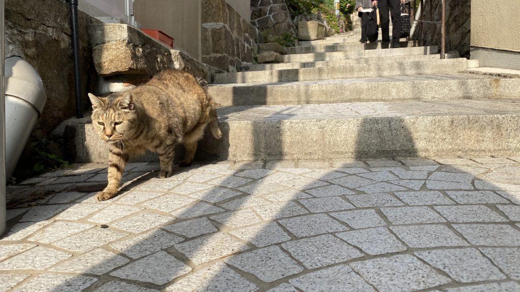 尾道で降りてきた猫