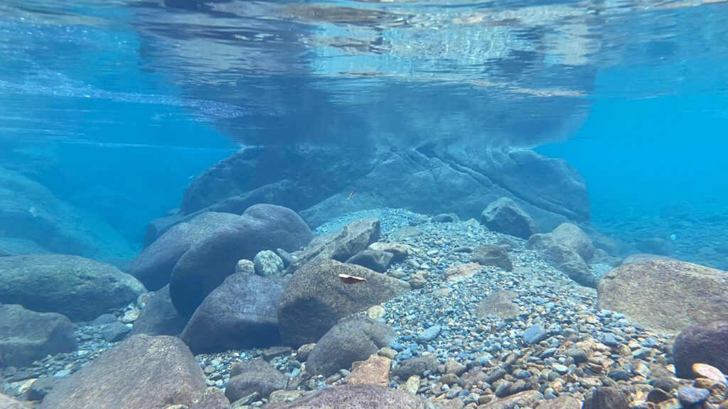 水中の写真