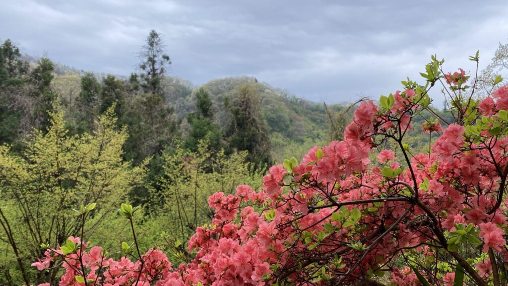 桜の時期が過ぎても見所はたくさん