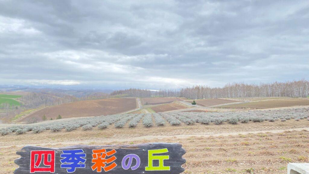 5月の四季彩の丘